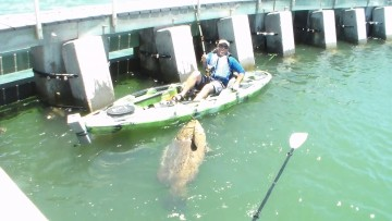 CapeCoralFish
